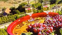 Экскурсия винный тур в Одессе заказ и организация экскурсий